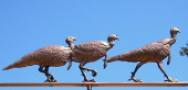 Three Turkeys Weathervane